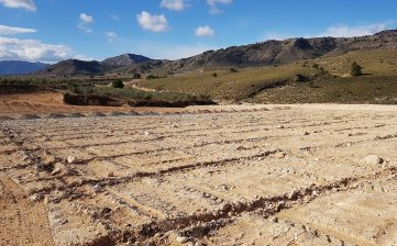 Montaje de riego por goteo en Abarán
